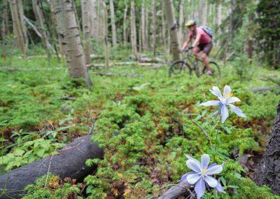 Colorado-Trail-2014_07_14_0140