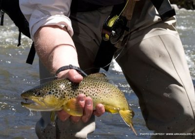 brown-trout-fishing-arkasas-river-colorado