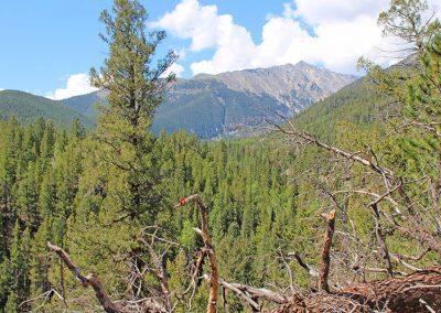 browns-creek-hike