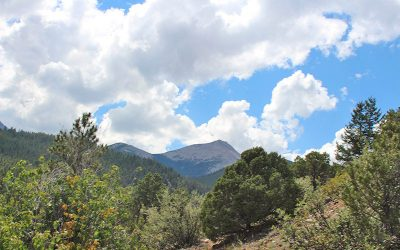 browns-creek-trail-mount-antero