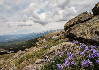 continental-divide-trail-2014_07_05_0129