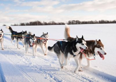 DOG SLED TOURS.
