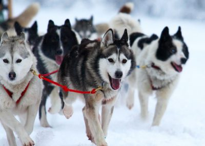 dog-sledding-tours
