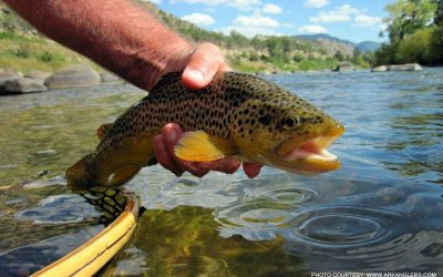 fishing-for-brown-trout-on-the-arkansas-river