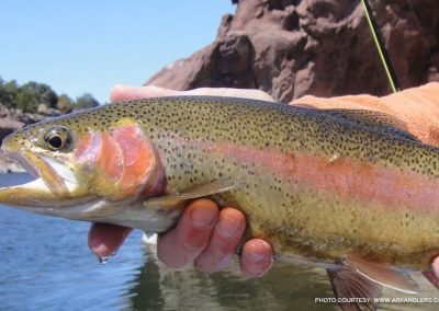 rainbow-trout-arkansas-river-colorado